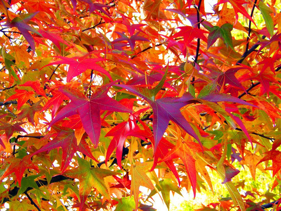 autumn when autumn came When is the autumnal equinox 2018 find out when the first day of fall is and see autumn folklore  autumn folklore and verse autumn days come quickly.