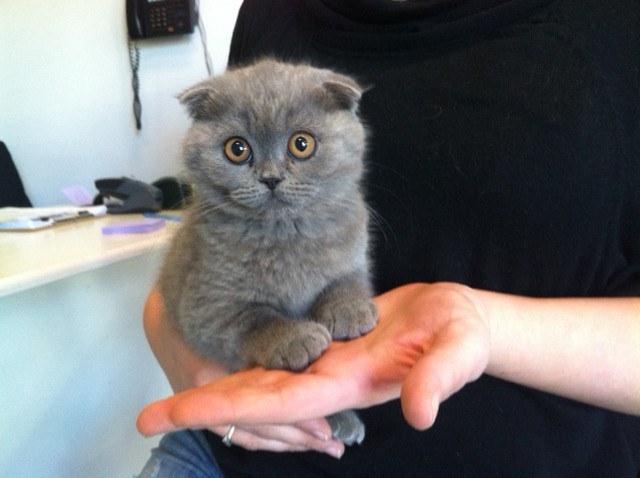 Top 10 Cutest Cat Breeds