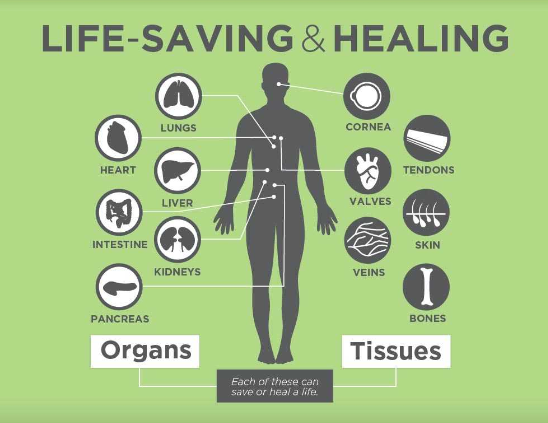 why you should be an organ tissue Virtually anyone can become a donor your medical condition at the time of death  will determine what organs and tissues can be donated can be donated for.