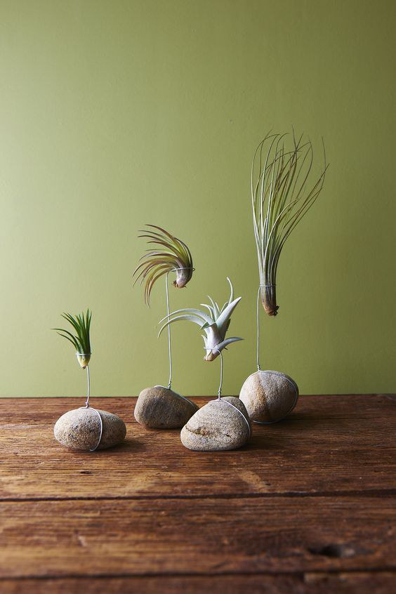 Simple Diy Crafts Using Air Plants