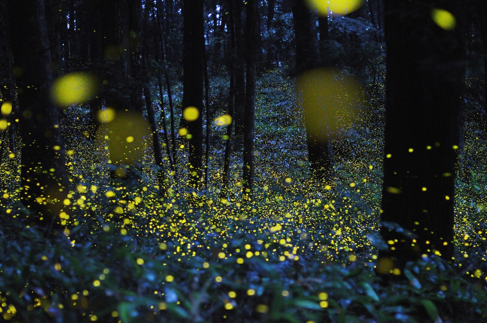 Or Maybe You Call Them Lighting Bugs. Whichever, How Many Of Those Will You  Find In The City? There Is Nothing Better Than Seeing What Looks Like  Twinkling ...