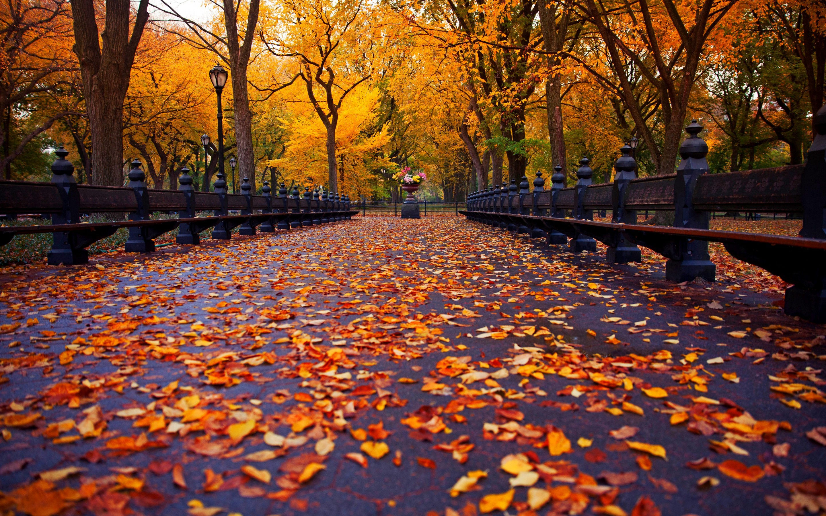 Image result for autumn in ny
