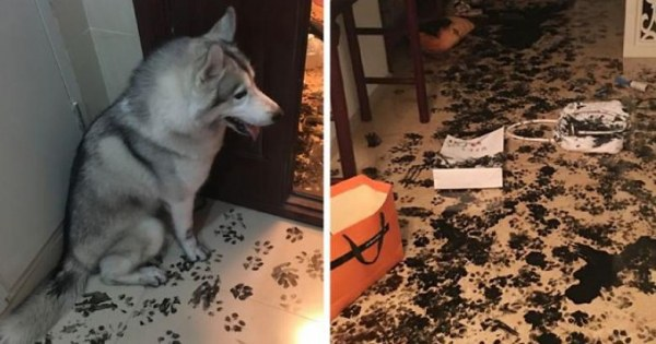 Картинки по запросу What is the dogs doing while owners aren't at home