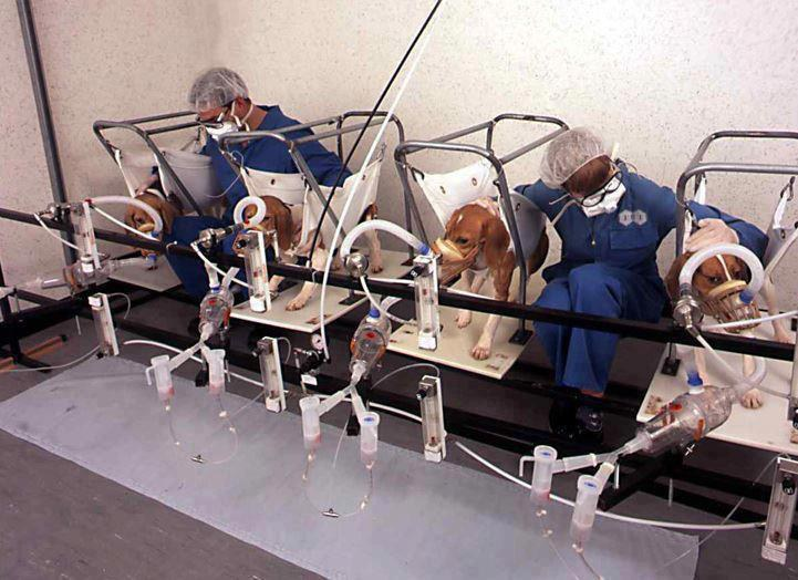 animal testing is inhumane and should be banned Animal experimentation up 73 percent  has banned the sale of cosmetics with the spread of this inefficient and inhumane practice has caused animal use to.