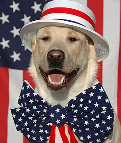 Seven Of The Most Patriotic Dogs Ever