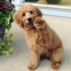 10 Adorable Mixed Breeds You Need To See