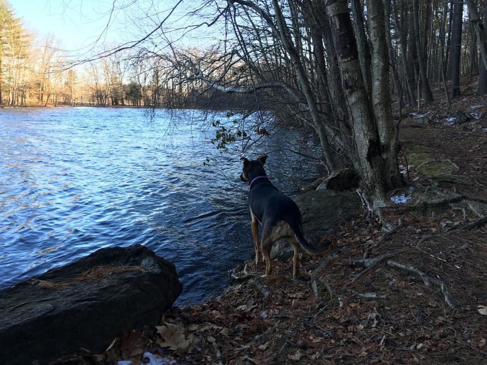1 Lake Elise