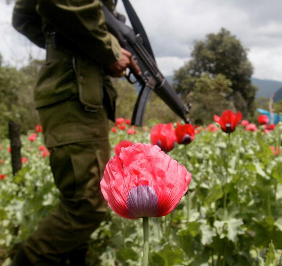 Mexican Poppy Regulation