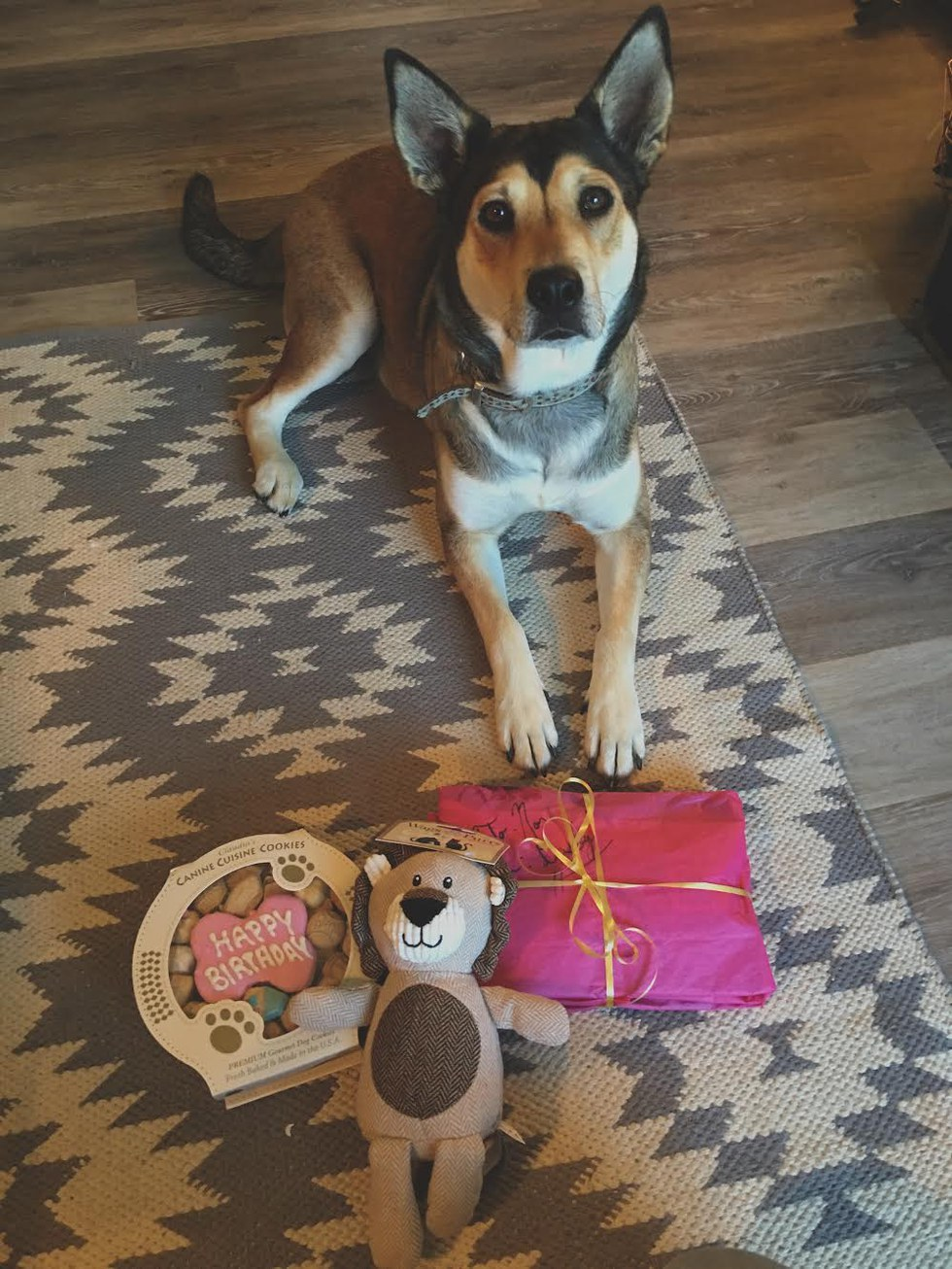 Dog Moms Will Make Their Little Ones Birthday Special Which Of Course Involves The Proper Treats Gifts And Picture Perfect Moment To Show Others How