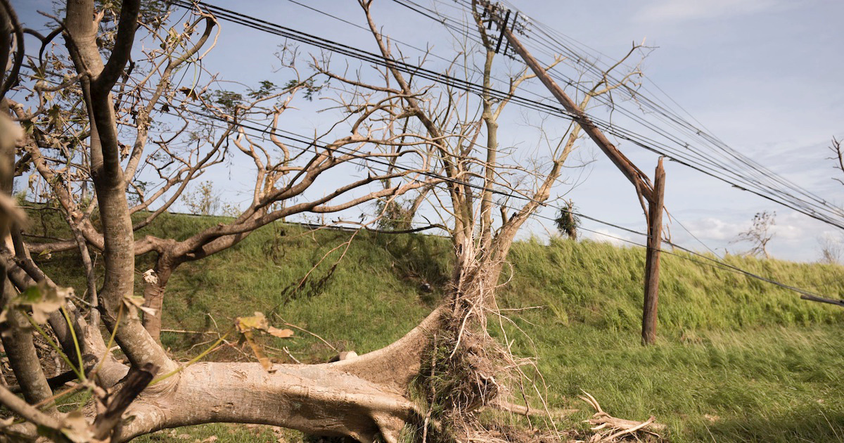 photo image Whitefish Charges Puerto Rico $319 an Hour for Linemen, Then Pays Them $63 an Hour