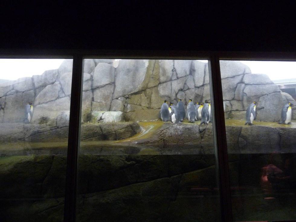 10 Facts About The Detroit Zoos New Penguinarium
