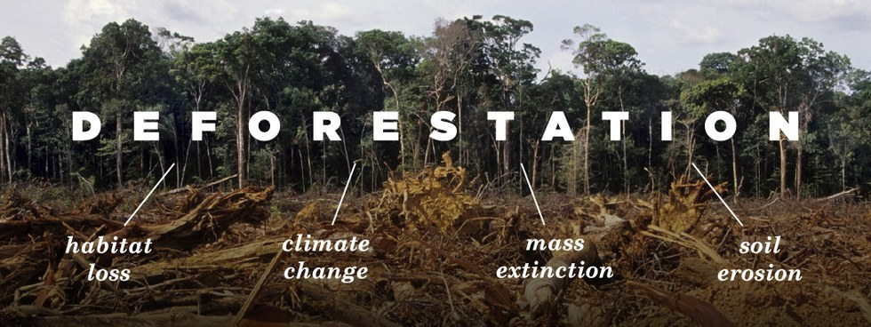 clear forest cause extinction of wildlife