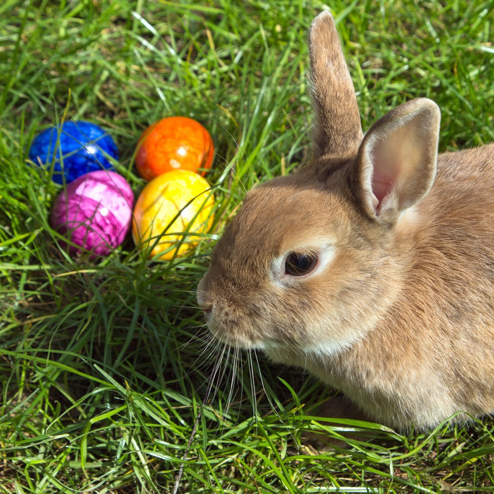 Four Of The Symbols Of Easter Explained