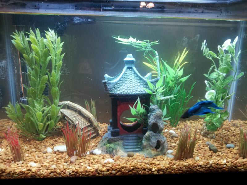 Your future betta fish is sick and you might not even for Best place to buy betta fish online