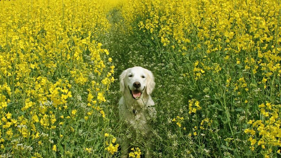 Собака в поле бесплатно