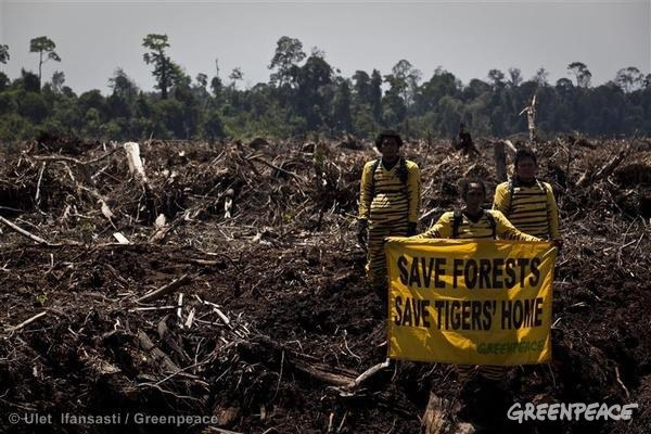 destroying the rain forests human effects on The rainforests of southeast asia are under constant threat from detrimental human impact/involvement most notoriously, the region's forests are endangered and threatened by conversion to agriculture, logging (both legal and illegal), and encroaching oil palm plantations.