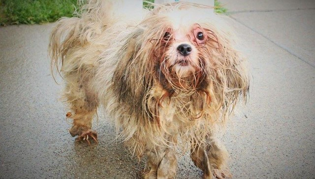 Love Changed Everything For This Sad, Shaggy Stray Dog