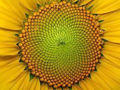 Fibonacci art   11 beautiful examples of art inspired by science.