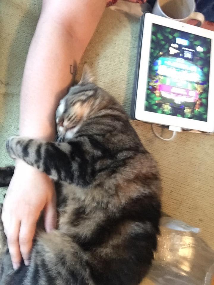 raising a cat