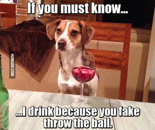 Simple Fake Throw Ball Adorable Dog - 980x  Gallery_431424  .jpg
