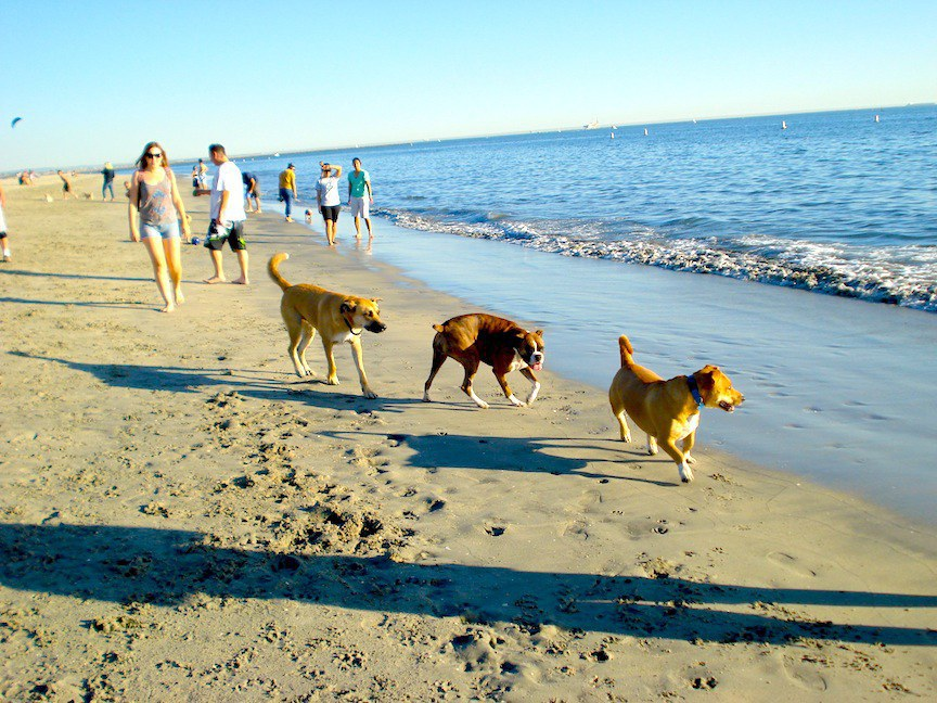 Long Beach Is Super Dog Friendly