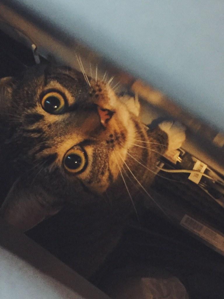 Adopt A Cat In College