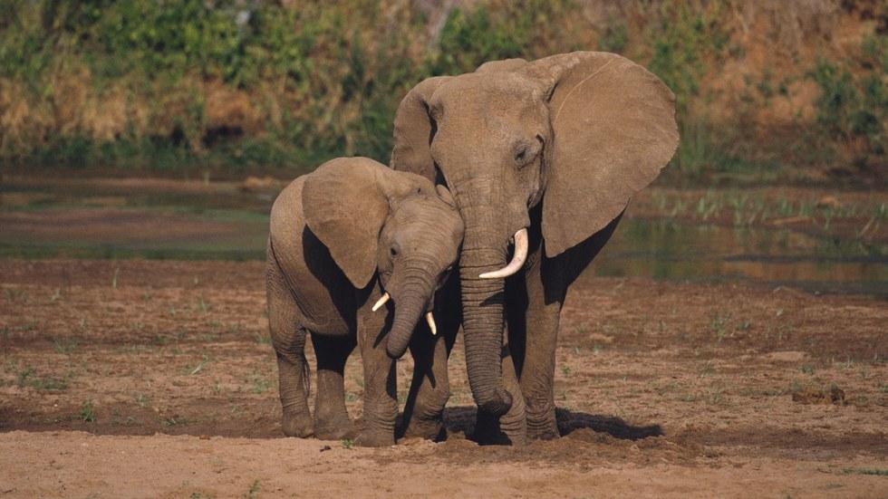 We Need To Save The Elephants
