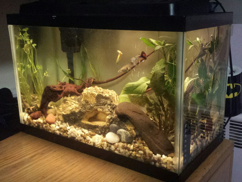 What you should know before setting up a fish tank for Fish tank set up