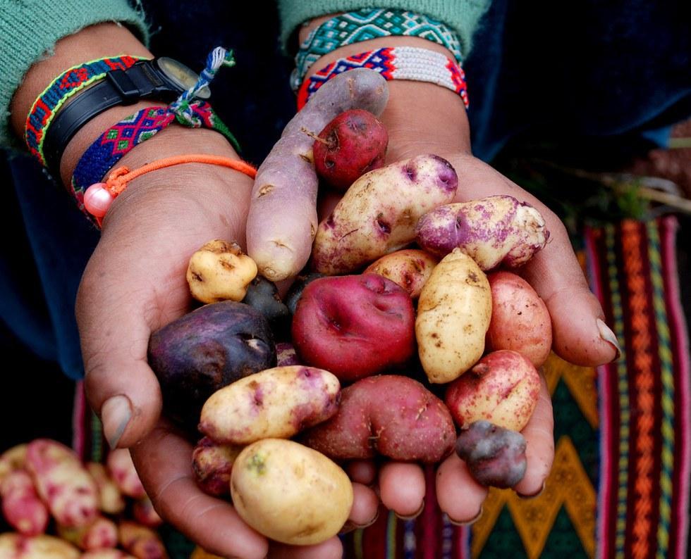 columbian exchange potatoes