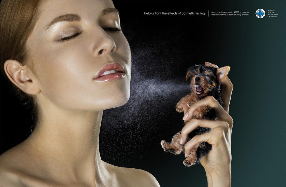 cosmetic testing animals essay