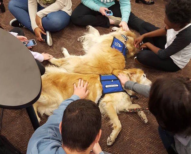 Mental health dogs are a favorite for students on campus.