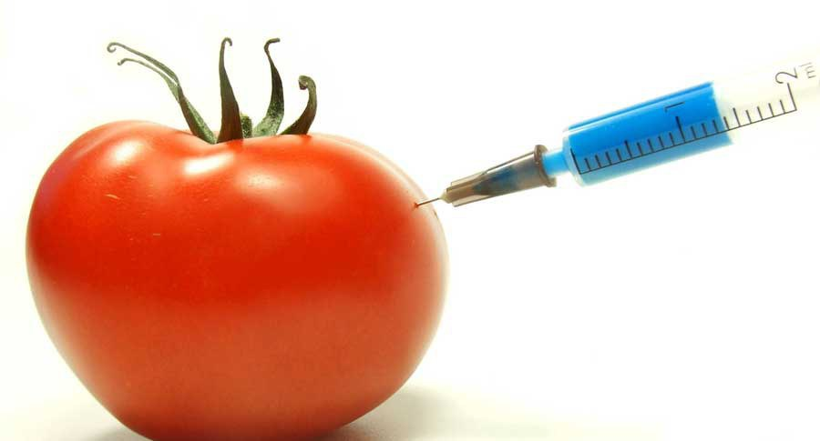 genetically modified foods should be promoted