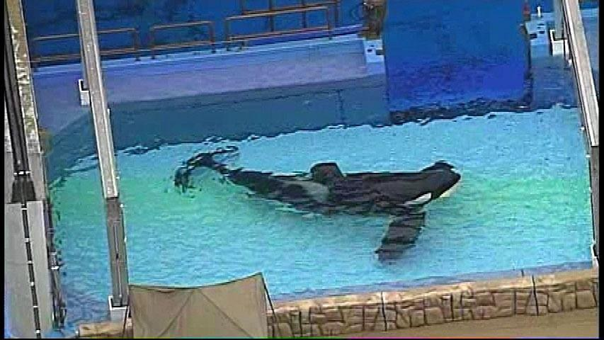 Incidents At Seaworld Parks: Captured Willy: The Truth About SeaWorld