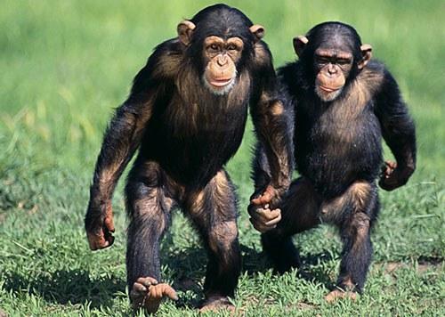 Top 10 Zoo Animals