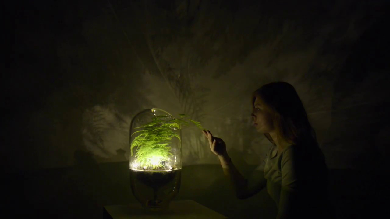 photo image Bright Idea: This Lamp Harvests Its Own Energy From Plants
