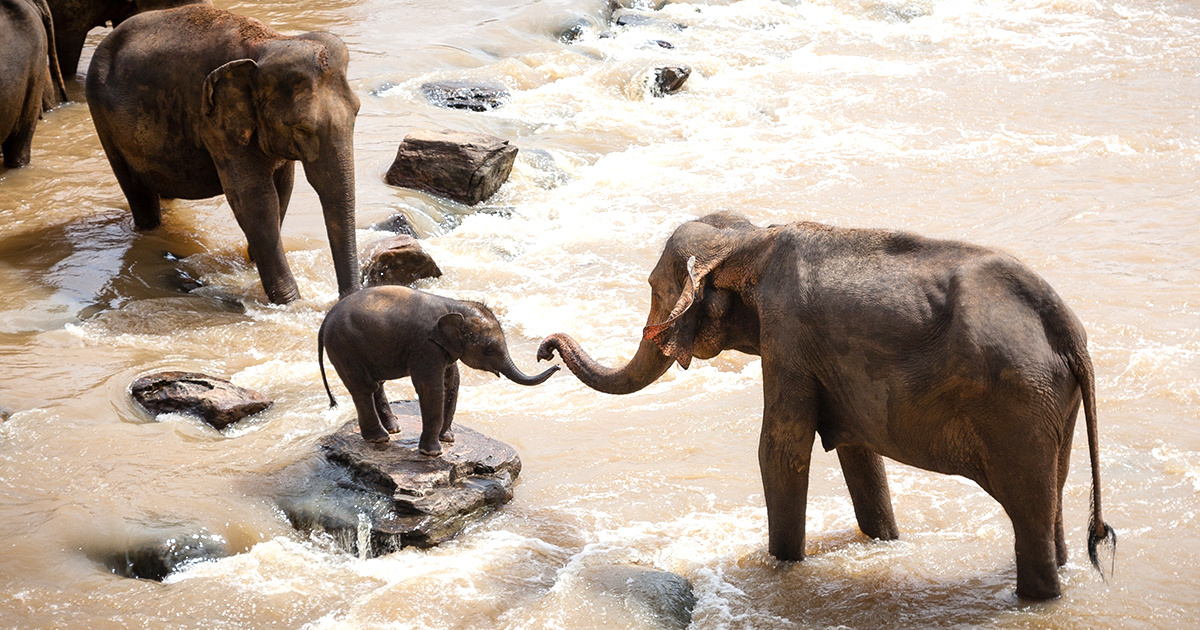 Trump s Hold on Elephant Trophies May Not Be Enough