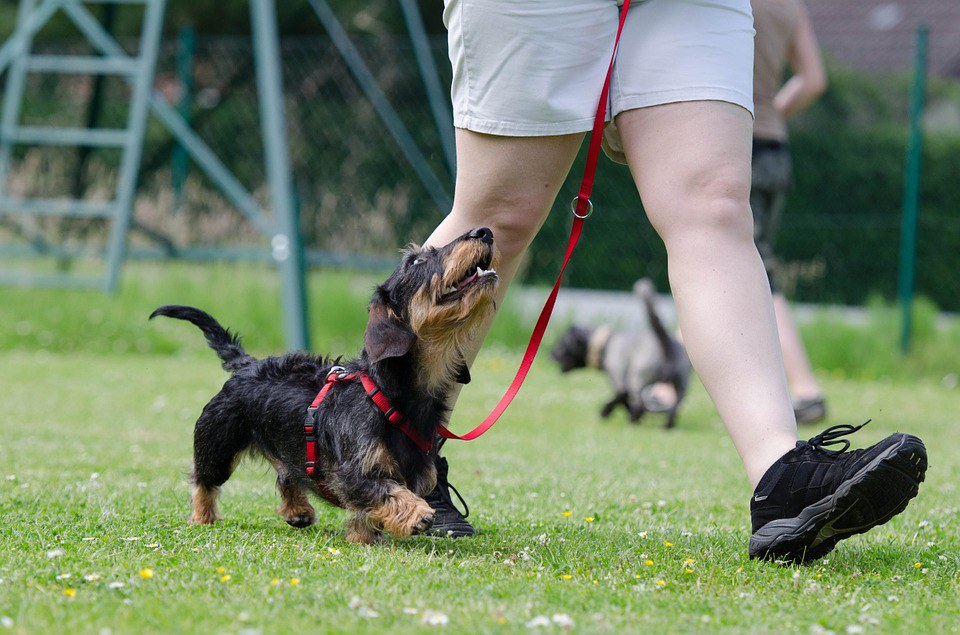 11 reasons dachshunds are the best