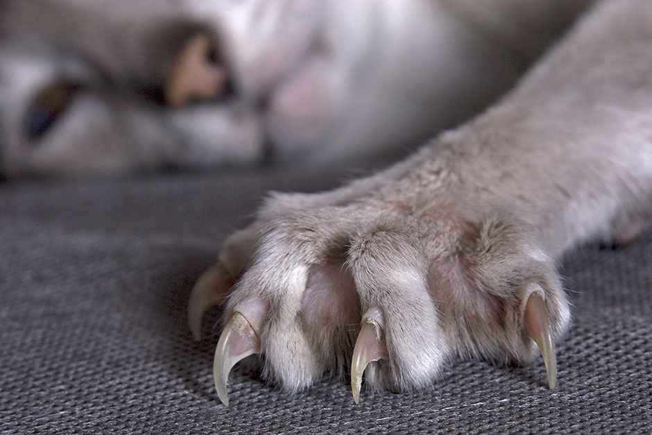 Why Declawing Your Cat Is Cruel And Why It S Time To Stop