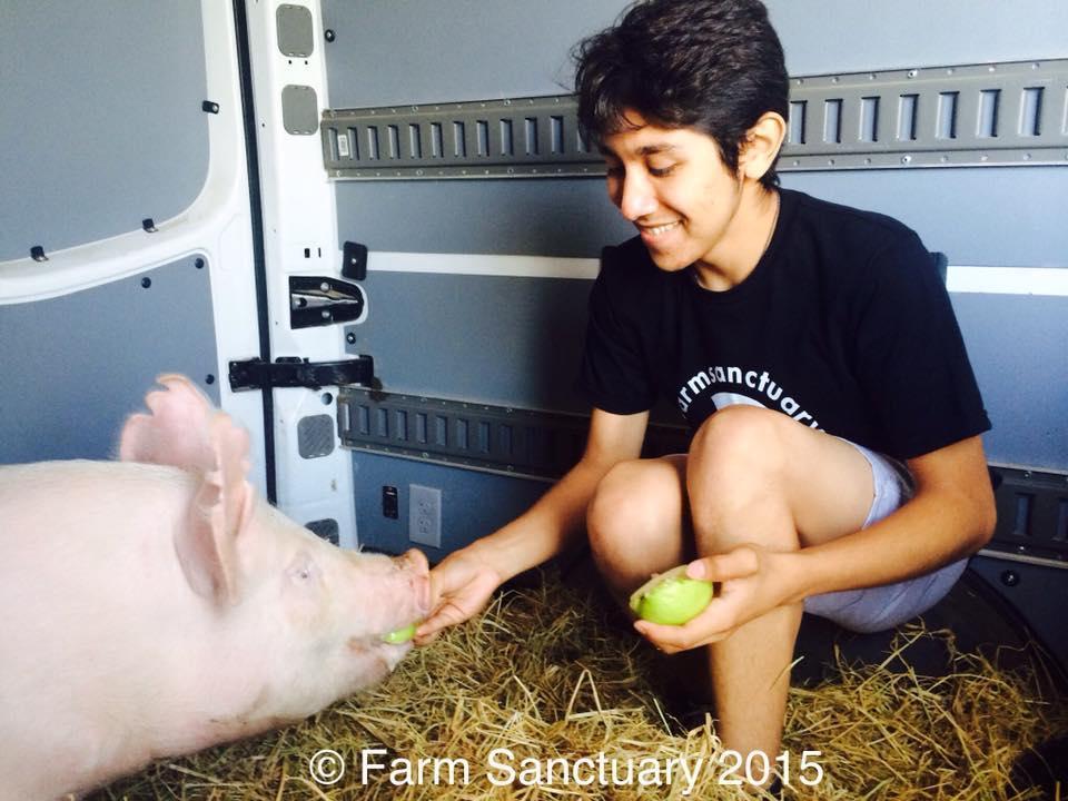 Bruno Feeding Lola