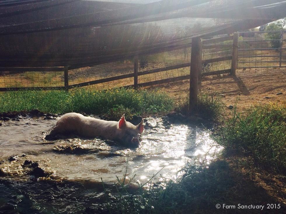 Lola Having A Mud Bath