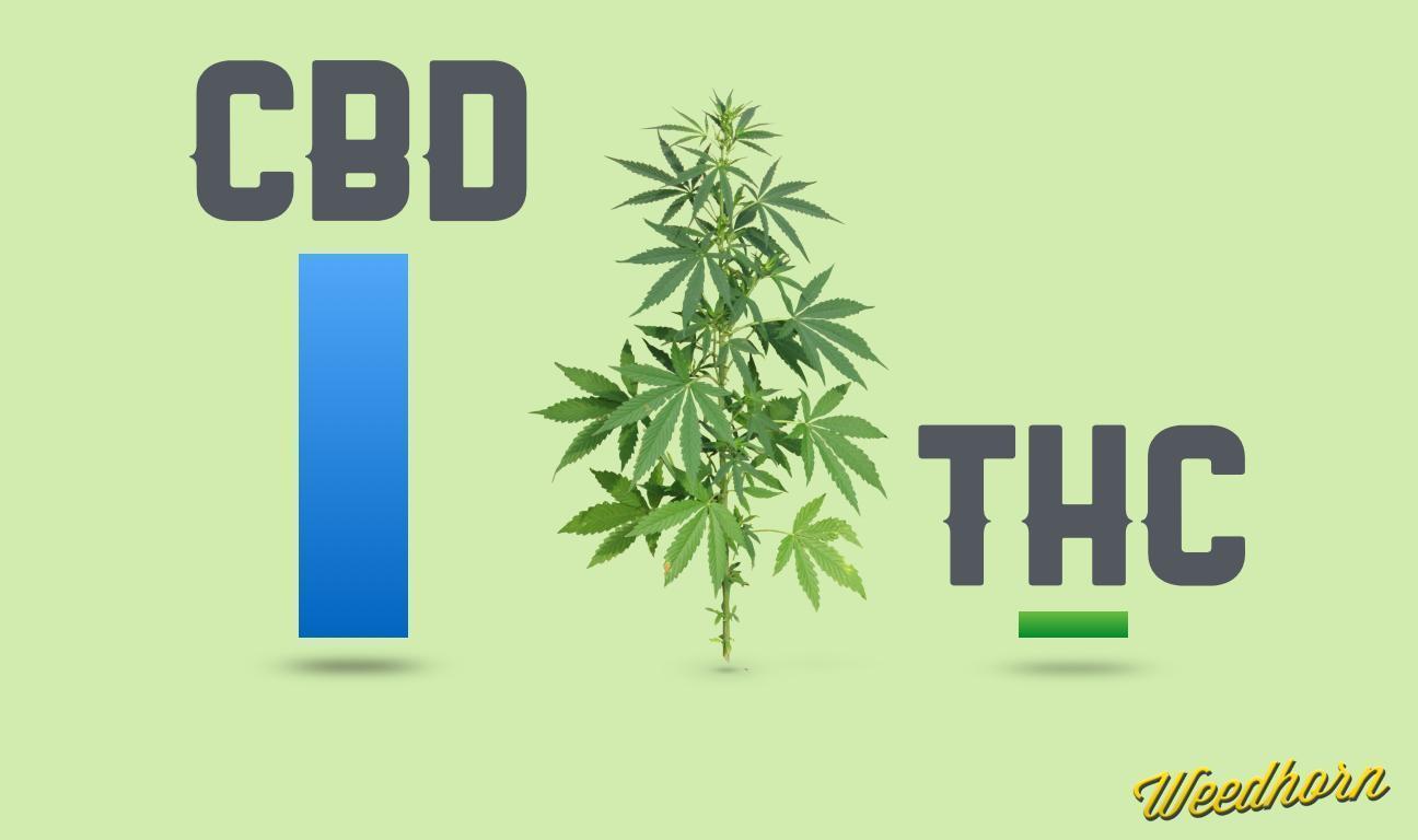 5 Marijuana Strains High In CBD