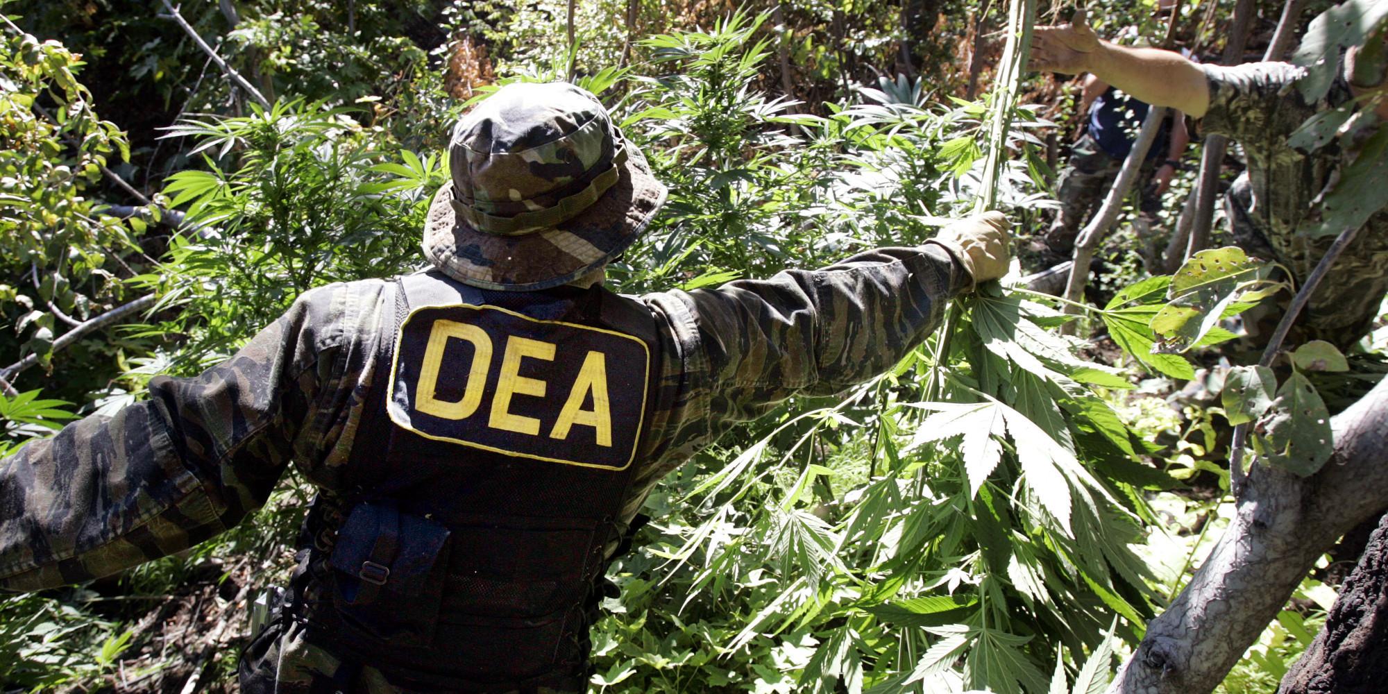 DEA Raids Legal Marijuana Grows on Tribal Lands