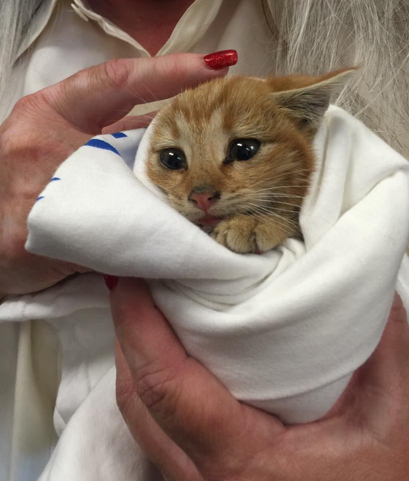 new kitten not eating