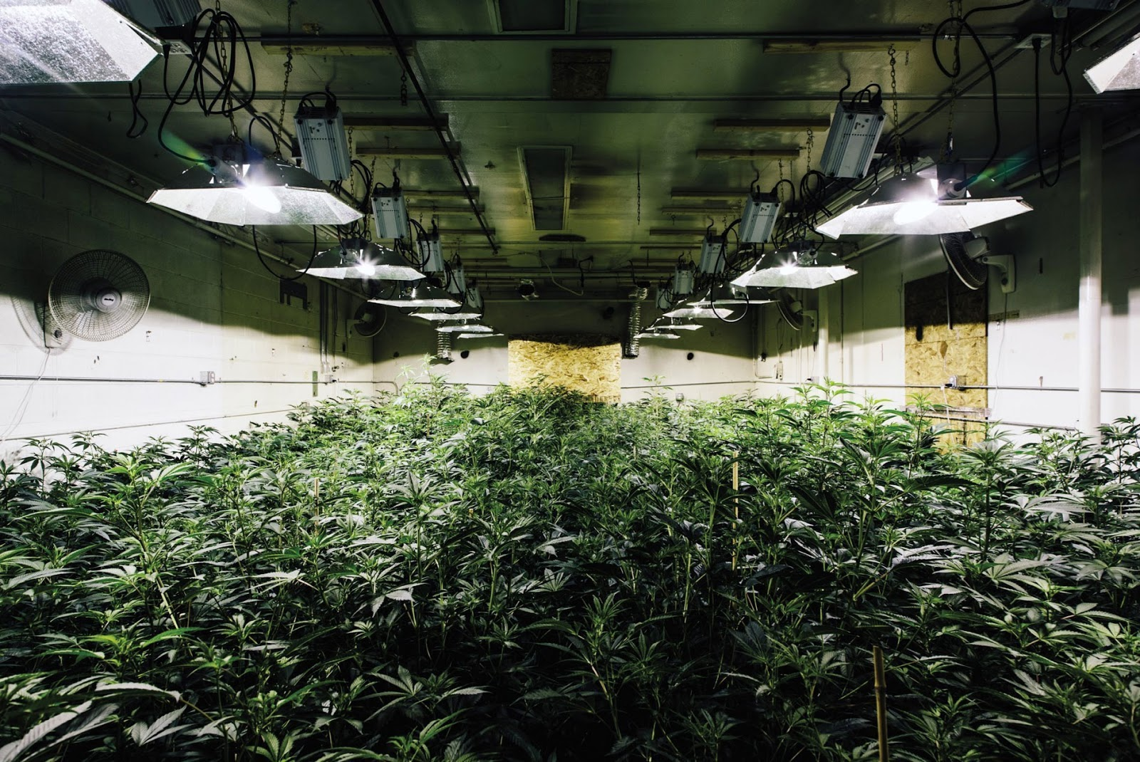 The 8 Essentials to Growing Weed