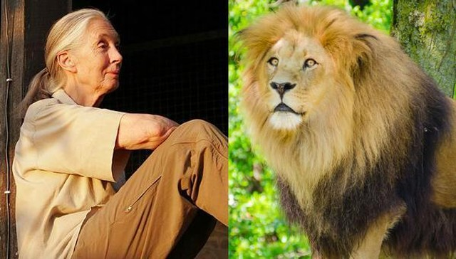 In The Darkness... Jane Goodall Death