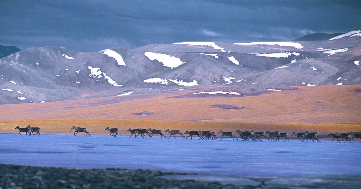 While America Focuses on Tax Bill, Congress Quietly Tries to Open Arctic Refuge to Oil Drilling