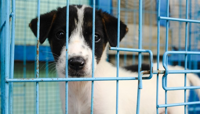 Major U.S. City Now Requires Pet Stores To Only Sell Rescues