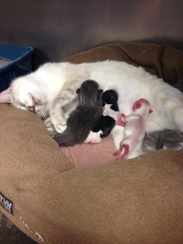 Photos: Mother Cat Adopts Two Premature Chihuahua Puppies