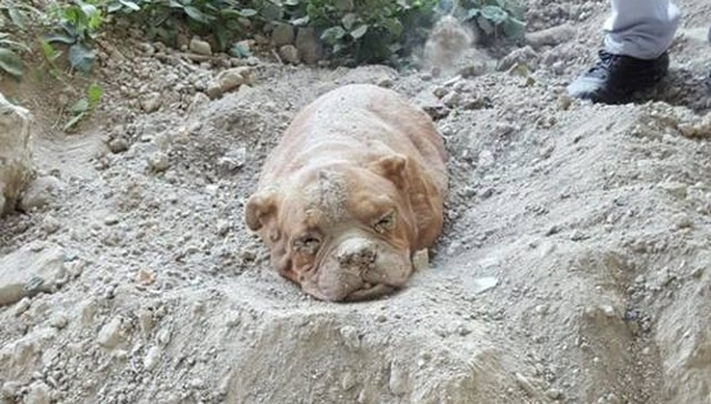 man who buried dog alive thought no one would find her