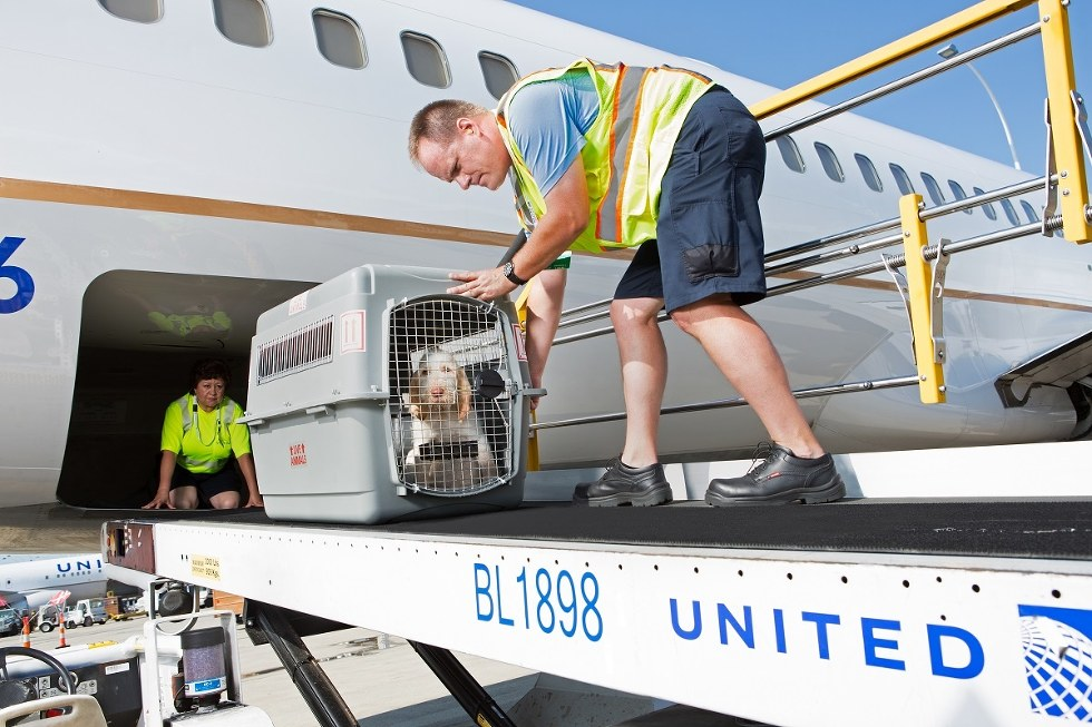 United employee removing a pet safely from the plane